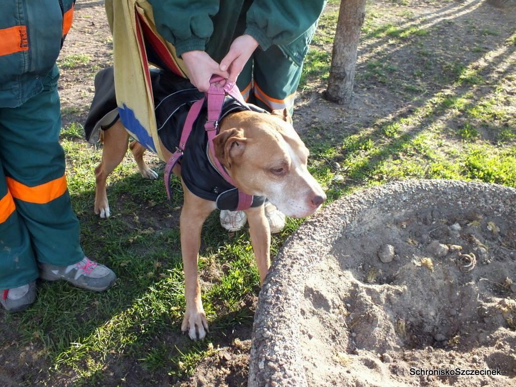 Zwierzaki, Pokąsany przez żmiję sparaliżowany potrzebuje leków - zdjęcie, fotografia