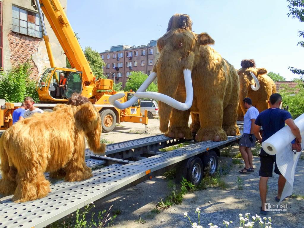 Zwierzaki, Szczecineckie mamuty pojechały morze - zdjęcie, fotografia