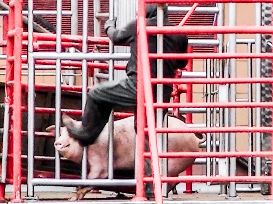 Interwencje, Zwierzęta rzeź Nagrano niesłychane okrucieństwo przemoc - zdjęcie, fotografia