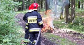 Pożar lasów w Czarnoborze. Wielkie ćwiczenia straży pożarnej