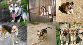 Psy ze schroniska czekają na nowych właścicieli!