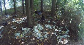 Strażnicy na tropie śmieciarza, kocięta na śmietniku oraz 55 innych interwencji