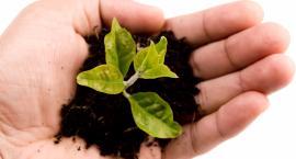 Mocne, zdrowe i szybko wzrastające rośliny - dzięki produktom Ziemia Polska to możliwe!