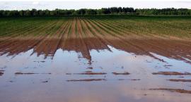 Duże straty w uprawach. Rolnicy w Gminie Szczecinek chcąpodatkowychwakacji