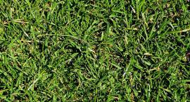 Boisko jako pasza, czyli radni kłócą się o trawę w Skotnikach