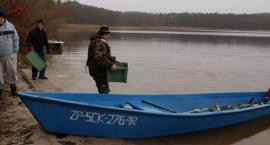 W Wierzchowie - plaga rybnego urodzaju