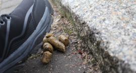 W Szczecinku żyje blisko 4,5 tys. psów. Dokąd trafiają psie odchody?