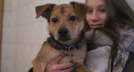 Schronisko w Szczecinku: 151 psów trafiło do nowych właścicieli