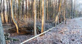 Las na Kościuszki zamienia się w park