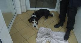 Złapali psa przy pomocy kiełbasy