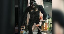 Ola Gintrowska porwana przez wielką małpę...