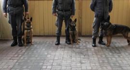 Psy policyjne szukały narkotyków w ZK Szczecinek