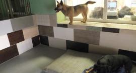 Pies jak pacjent. Radni pytają o koszyk świadczeń