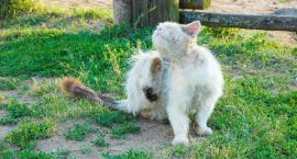 Pasożyty u psów i kotów. Dlaczego są groźne?