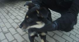 W Szczecinku pijany złapał psa za kark i rzucił nim o podłogę