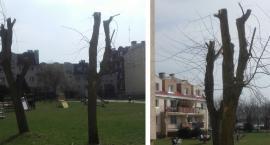 Drzew na osiedlu cięcie czyli... przegięcie [Wrzuć Temat]