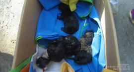 Jak pozbyć się niechcianych, małych kotków? Ktoś wyrzucił je na śmietnik