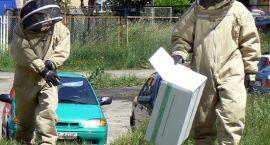 W centrum miasta strażacy walczyli z pszczołami