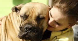 Jak leczyć dysplazję stawu biodrowego u psa?