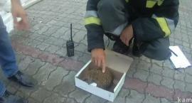 Strażnicy ratują jeża i odpalają samochody