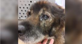 Czy starego psa można po prostu wyrzucić? Po uratowaniu płakał