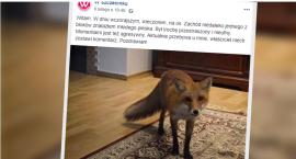 """Kto w Szczecinku szuka """"młodego pieska""""?"""