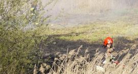 Płoną trawy i lasy. Strażacy wyjeżdżali prawie 40 razy