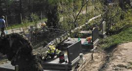 To cud, że ocalały. Olbrzymie drzewo runęło na groby. Poszukiwani świadkowie!
