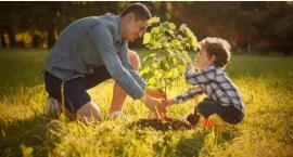 Każdy będzie mógł zasadzić własne drzewo. Wielka akcja z darmowymi sadzonkami już w piątek