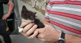 Uratowali małego kotka uwięzionego w ścianie piwnicy