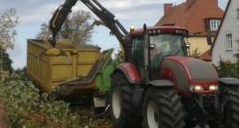 Wielka wycinka na ul. Kościuszki. 38 chorych drzew trafiło pod topór