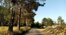 Nowa droga do Dzików, czy stare drzewa? Czytelniczka: Każde drzewo jest cenne, gdy płonie Amazonia!
