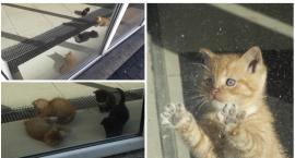 Wychudzone i głodne koty w opuszczonym lokalu przy ul. Wyszyńskiego. Kto im pomoże?