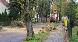 Ulica Matejki: Wycinka na żądanie mieszkańców