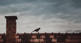 Powietrze w Szczecinku: Rok pod znakiem spadku jakości