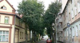 Wytną drzewa. Na ul. Emilii Plater znów zaświeci słońce
