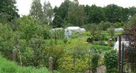 Miejskiego kempingu ani pola namiotowego nie będzie. Ogródki zostają