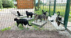 Kotom przybywa wyposażenia
