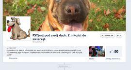 """""""PSYjmij pod swój dach"""" – nowy pomysł na Facebooku"""