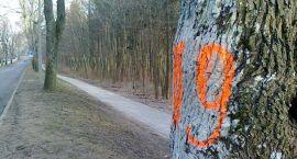 52 drzewa trafią pod topór