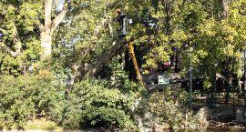 Jest zgoda na wycięcie 22 drzew