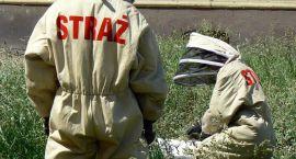 Bocian wypadł z gniazda, pomogli strażacy. W 15 innych przypadkach też