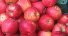 Darmowe jabłka, których nie ma
