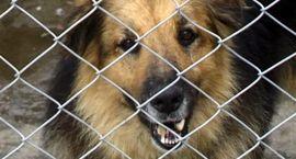 Za psa w gminie zapłacisz 100 zł. Chyba, że będzie miał czip