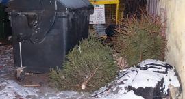 Święta się skończyły, choinki lądują na śmietniku
