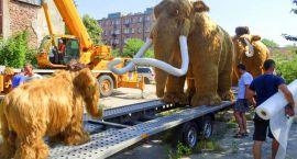 Szczecineckie mamuty pojechały nad morze