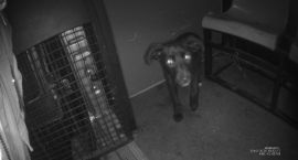 Strażnicy wyłapują psy bez opieki