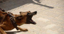 Pies zagryzł psa. Bezdomni nie chcą do noclegowni