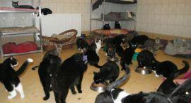 Za dużo kotów w mieście? Mieszkańcy muszą współpracować