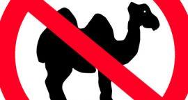Nie jesteśmy wielbłądami